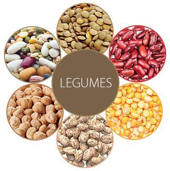 legumes cuisines legumes essential things to consider return2health