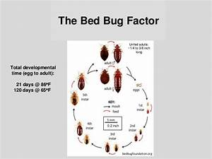 bed bug biology and research by dr susan jones at cobbtf With bed bug biology