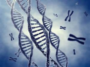 Genetics And Your Baby