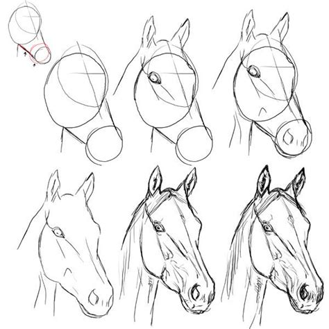 Kleurplaat Paardenhoofden by Schetsen Het Eerste Idee Met Vlugge Lijnen Tekenen Of In