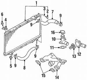 Chrysler Sebring Radiator Hose Clamp  Hoses  Make  Liter
