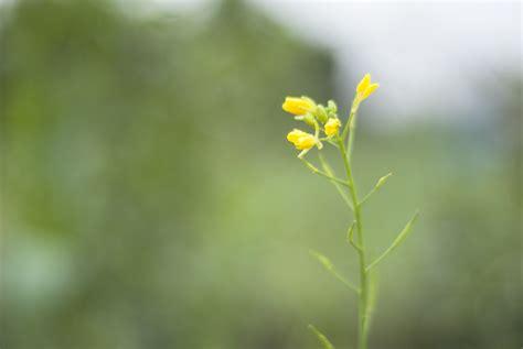 Garten Pflanzen Januar by Unser Garten Im Januar Ein St 252 Ck Arbeit