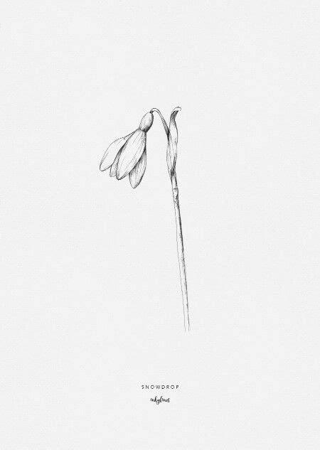 Snowdrop | Flower sketches, Botanical illustration, Art