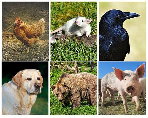 Characteristics Of Herbivores, Carnivores And Omnivores  A Plus Topper