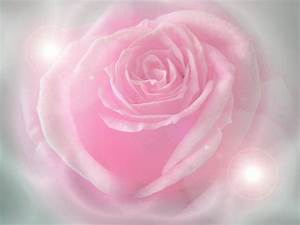 Pink Rose Wallpapers - Wallpaper Cave