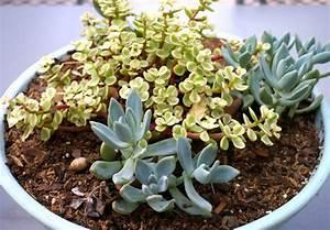 Welche Pflanzen Kann Man Im Herbst Pflanzen : gartenarbeit im herbst bereiten sie ihren hof f r den ~ Articles-book.com Haus und Dekorationen