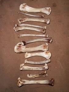 Bone Tower Free Stock Photo