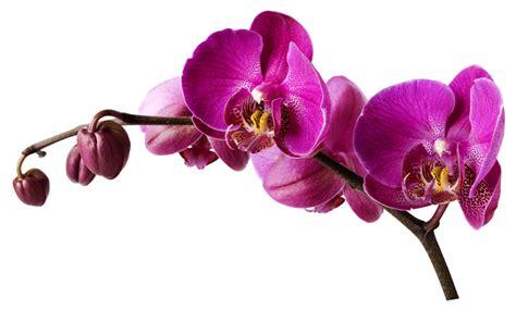 interrupteur cuisine stickers orchidée pas cher