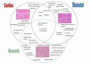 Tutor U0026 39 S Notes  General  Cardiovascular  Respiratory And