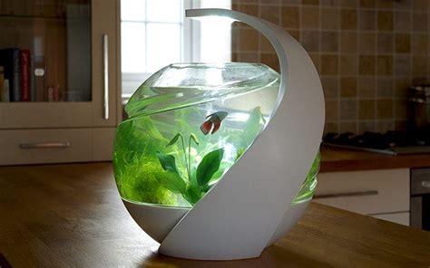 avo  cleaning fish tank ippinka