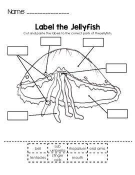label  jellyfish night   moonjellies school