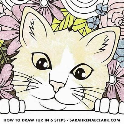 Pencil Colored Draw Fur Pencils Adult Coloring