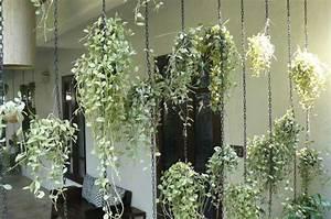 Rideau Pour Balcon : rideau de plantes tombantes ~ Premium-room.com Idées de Décoration