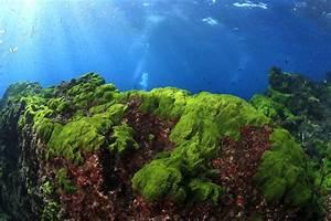 Ocean phytoplankton decreases change marine ecosystems ...
