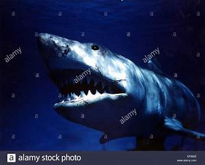 GREAT WHITE SHARK JAWS (1975 Stock Photo: 78243986 - Alamy