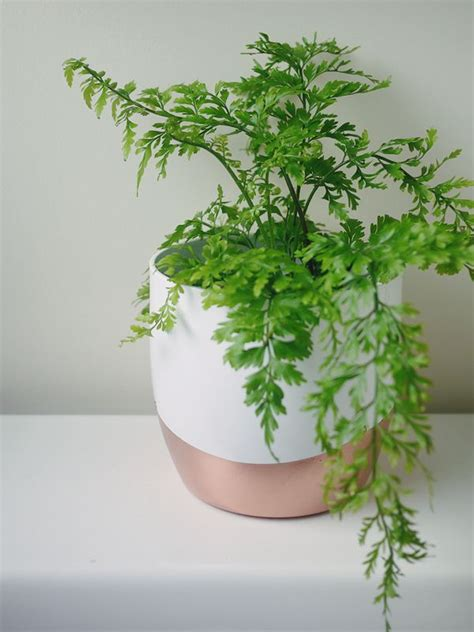 pot plants for the bathroom diy copper white plant pot fern for bathroom vase