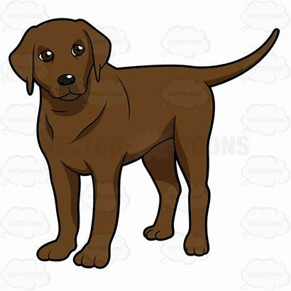 Labrador Lab Dog Chocolate Clipart Standing Side