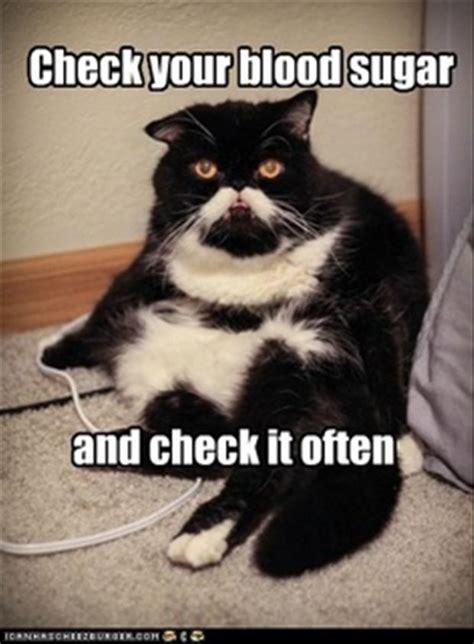 Diabetes Cat Meme - john tuohy s me vs diabetes august 2013