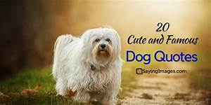20 Cute & Famous Dog Quotes | SayingImages.com