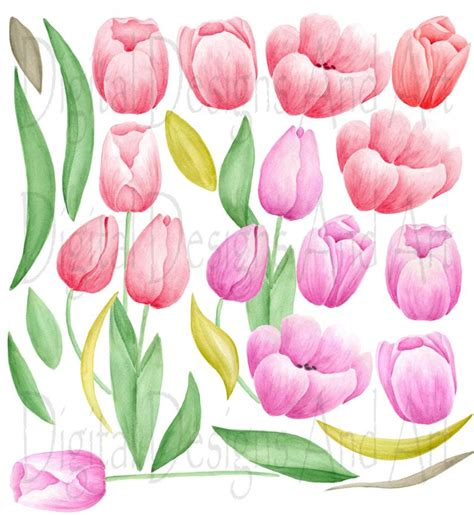 watercolor tulips clipart pink red tulip clip art hand etsy