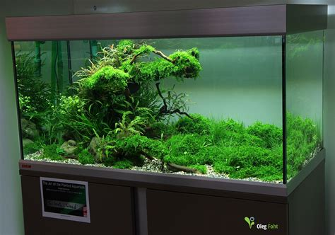 aquascaping planted tank the of the planted aquarium 2015 4 place