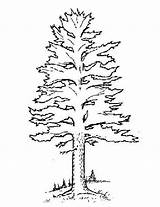 Pine Coloring Tree Trees Pages Forest Template Pdf Templates Printable Getcolorings Preschool Version Sketch sketch template