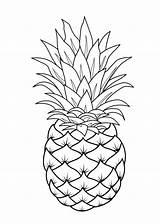 Coloring Fruit Printable Pineapple sketch template