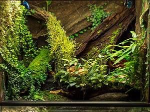 Pflanzen Terrarium Einrichten : aquascaping paludariums terrariums pinterest vivarium terraria and aquariums ~ Watch28wear.com Haus und Dekorationen
