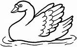 Swan Coloring Clipart Swans Template Swimming Printable Animals Results Templates Popular Related sketch template