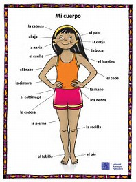 Worksheets Body Parts In Spanish Worksheet of parts the body in spanish worksheet sharebrowse collection sharebrowse