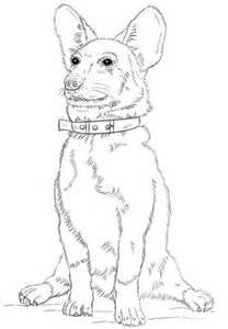 corgi dog coloring page  printable coloring pages