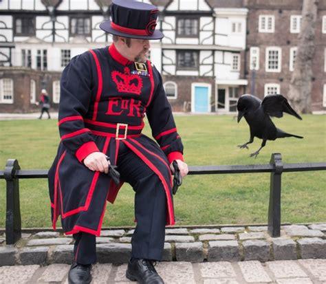 bureau londres les corbeaux de la tour de londres retrouvent leur liberté