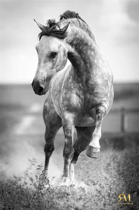 images  wicked whites gorgeous greys