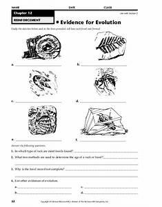 Evidence For Evolution Worksheet For 7th
