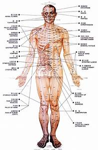 Acupuncture Points  China Herbal Medication  Chinese Traditional Medicine