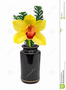 Einzelne Blume Vase : gelbe blume orchidee im vase stockbilder bild 2083924 ~ Indierocktalk.com Haus und Dekorationen