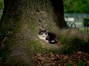 cat park 5 days in tokyo cats of hibiya park suggestion of motion