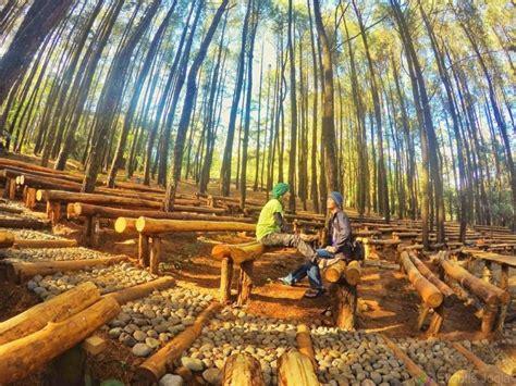 spot foto keren  hutan pinus mangunan jogja  hits