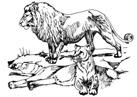 Página Para Colorir Leão E Leoa