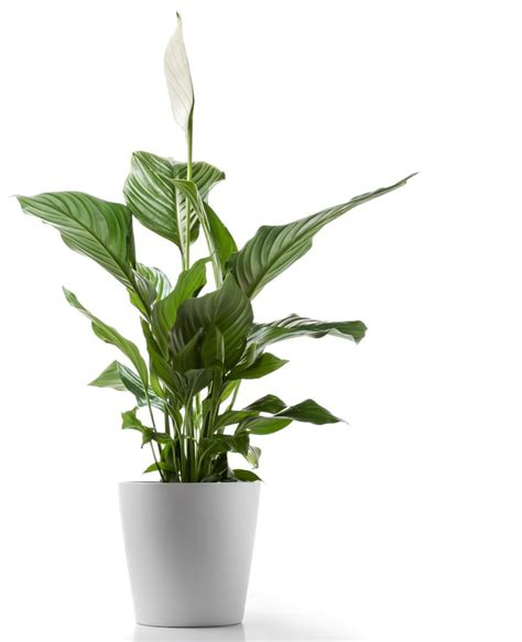 5 to kill houseplants for apartments with low light apartment therapy