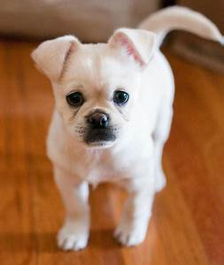 He is so Adorable, this is Charlie the mix breed ...