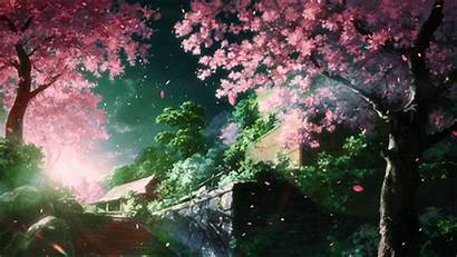 Scenery Anime Cherry Sceneries Spring Blossom Blossoms