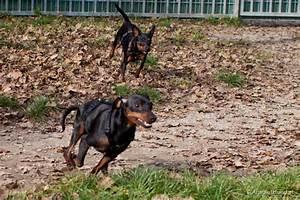 Hund Im Haus : ein zweiter hund kommt ins haus ~ Lizthompson.info Haus und Dekorationen