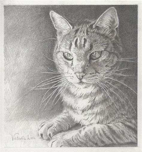 Sunlit Tabby Cat Drawing By Victoria Lisi