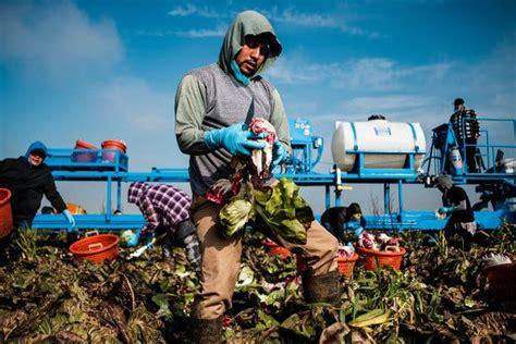 california farmers backed trump   fear losing field