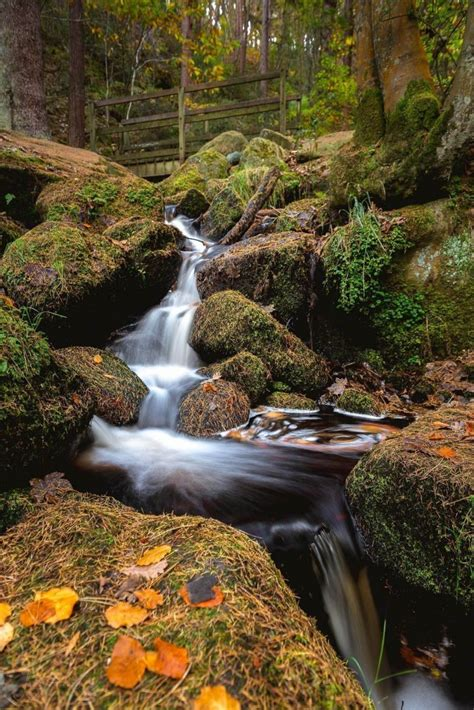 Wyming Brook Nature Reserve - James Pictures