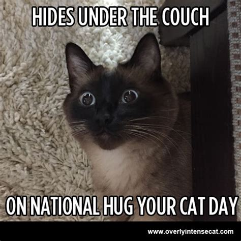 Cat Hug Meme - cat hug meme sad cat quickmeme no hug for you grumpy cat