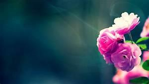 Flower Wallpapers | Best Wallpapers