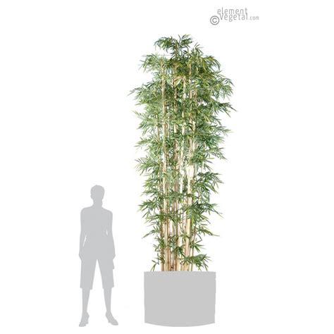 bambou geant en pot bambou g 233 ant semi naturel elementvegetal grossiste en plantes stabilis 233 es et plantes