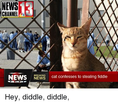 Newspaper Cat Meme - news channel a news breaking cat confesses to stealing fiddle hey diddle diddle funny meme on